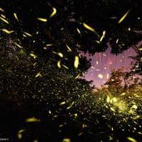 Cava de' tirreni, la foto che racconta l'esplosione delle lucciole