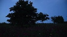 Contursi Terme, l'incanto delle lucciole
