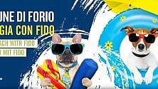 """""""In spiaggia con Fido"""", a Forio arenili dog friendly"""