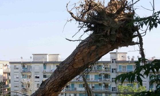 Napoli, paura a Rione Alto: albero crolla sui motorini