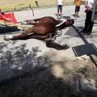 Cavallo morto alla Reggia Caserta: aveva temperatura molto alta. Il sindaco