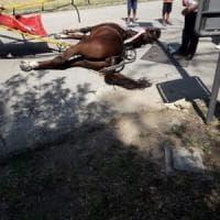 Cavallo morto alla Reggia di Caserta: la Procura indaga per maltrattamento