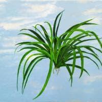 """""""Deposito materiale di senso"""", mostra di Lello Lopez alla Shazar Gallery"""