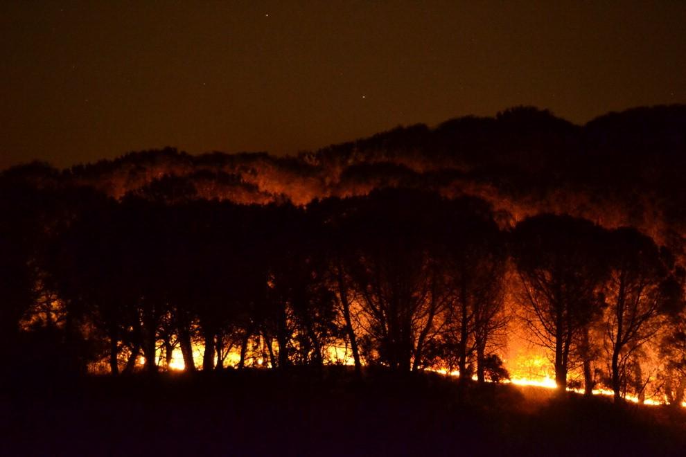 Etna, brucia la Pineta di Nicolosi: la conta dei danni$