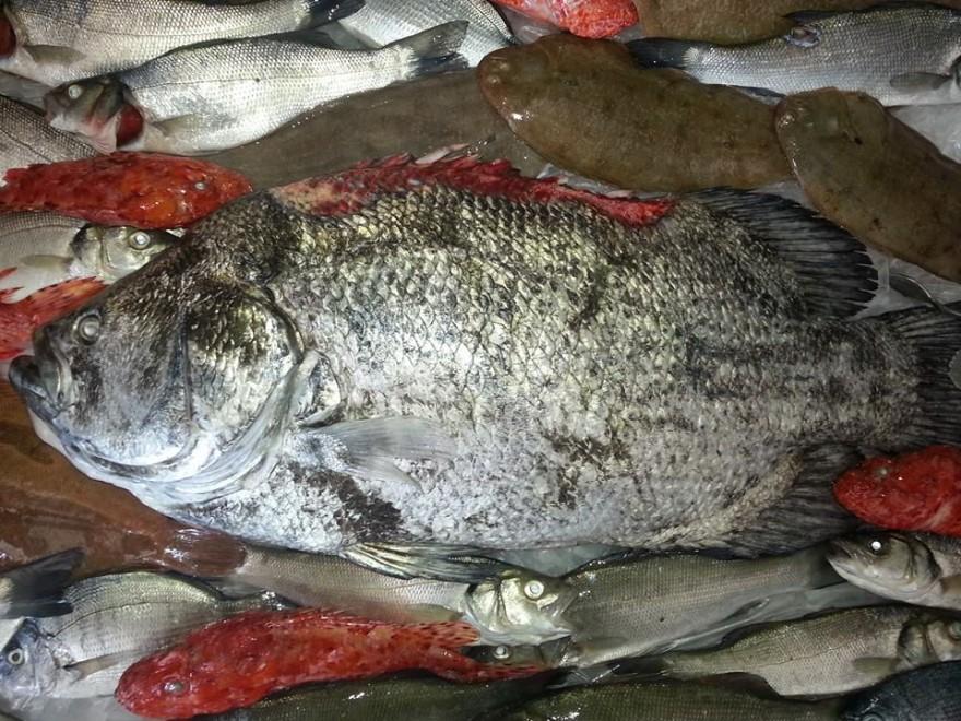Pesce introvabile pescato nel mare di Sciacca