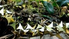 Arte, verde e riuso mostra all'Orto botanico