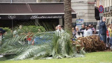 Palma cade per il vento e uccide donna   Vd   era seduta su una panchina con la figlia   Foto