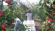 Imprenditori palermitani  coltivano uva nel deserto