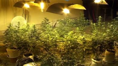 Palermo, blitz in un ex convento   Video    trasformato in piantagione di cannabis