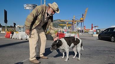 Guardiani in banchina e navigatori  ecco i cani del porto salvati dai volontari