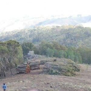 Via il bosco per la centrale a biomasse, rivolta nel cuore della Sicilia