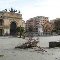 Raffiche di vento e alberi abbattuti, paura in strada