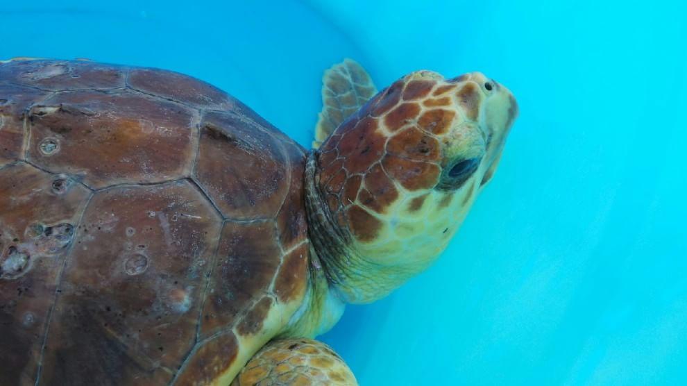 Favignana apre il pronto soccorso per le tartarughe for Vasche per tartarughe marine