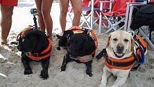 In spiaggia a Mondello i cani baywatch  foto