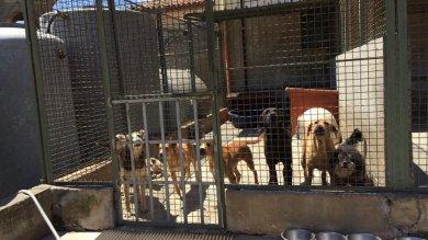 Cane con malattia contagiosa il canile comunale in quarantena
