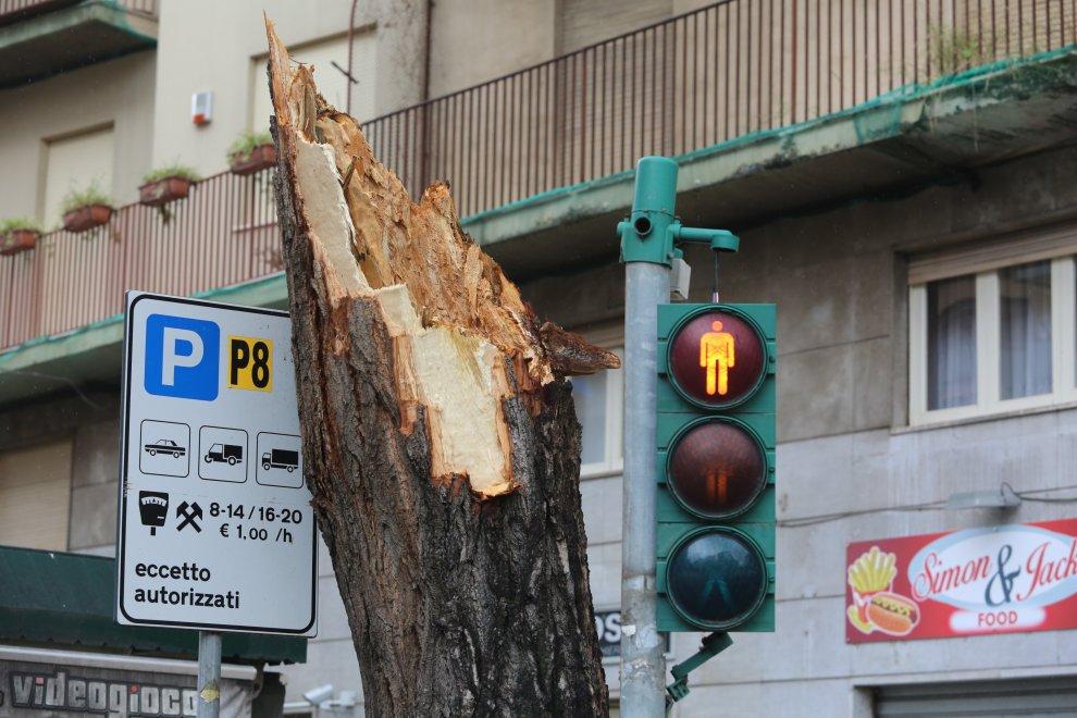 Vento su Palermo, alberi abbattuti