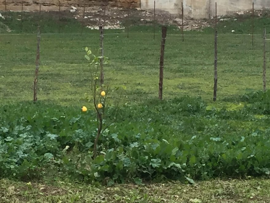 """Danisinni, rinasce il """"Giardino arabo di Gesù"""""""