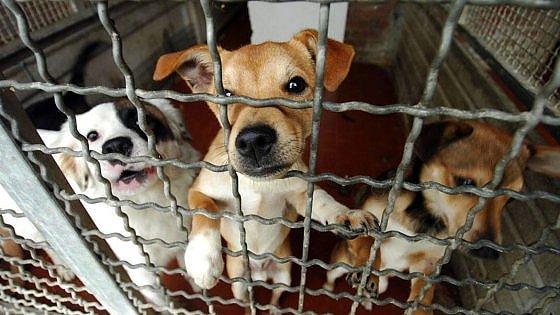 """Gli operai Reset attendono l'indennità """"canile"""" così degli animali si occupano i volontari"""