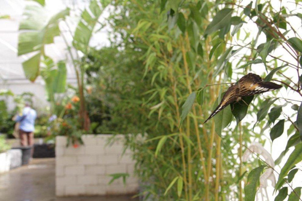 La casa delle farfalle a Modica