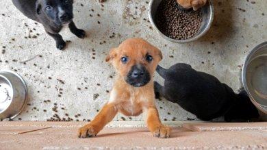Siracusa: contributo del Comune  a chi adotta un cane