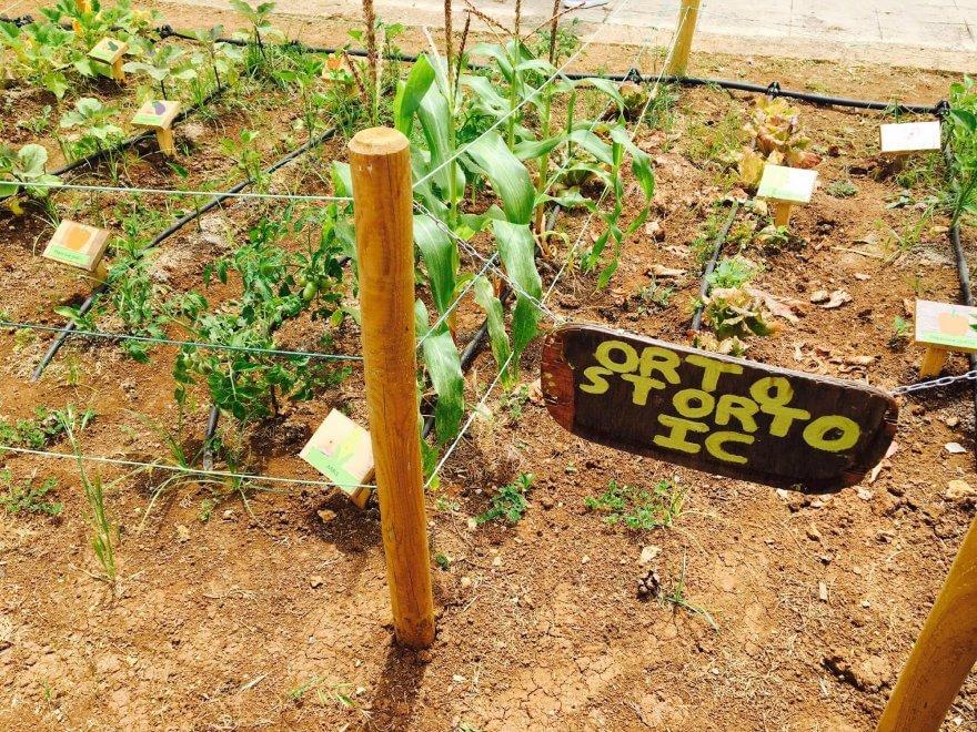 Palermo: alla scuola Setti Carraro nasce l'orto curato dai ragazzi