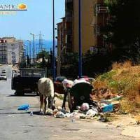 Porto Empedocle: cavalli al pascolo fra i rifiuti
