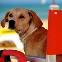 Lipari e Vulcano, il sindaco vieta le spiagge ai cani