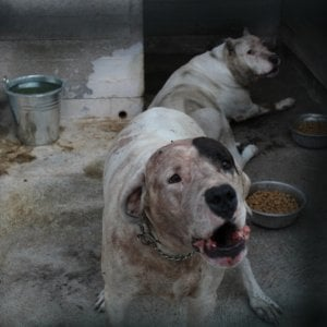 Bimbo sbranato dai cani a Catania, la madre accusata di abbandono di minore