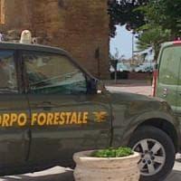 Corpo forestale, in Sicilia non ci sarà l'assorbimento nei carabinieri