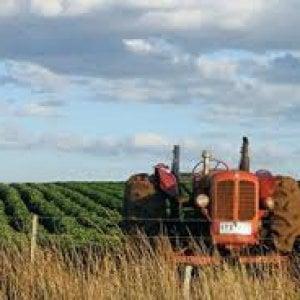 Allarme della Coldiretti, affari agromafia per 16 miliardi euro