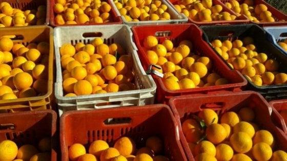 Agricoltura: l'Europarlamento prolunga le agevolazioni per le arance sudafricane. Protesta la Sicilia
