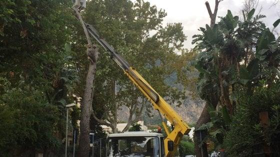 Mondello, abbattuti i pini di via Principessa Mafalda: proteste dei residenti