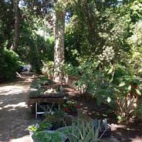Fiori e piante in mostra all'Orto botanico, jazz a Monte Pellegrino: gli