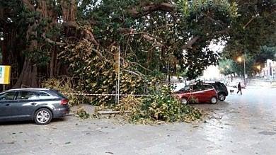 Si stacca un ramo dal ficus di piazza Marina danneggiate tre auto in sosta    /foto      Il grande albero voluto da Basile /la storia