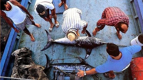 Ue, accordo per ridurre la pesca del pescespada, in allarme il settore ittico siciliano