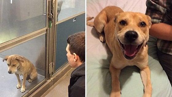 Palermo: 480 euro a chi adotta un cane del rifugio comunale