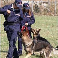 Blitz dei vigili all'ex Chimica Arenella, trovati sei cani maltrattati
