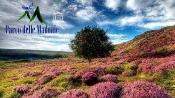 """""""Auguri dal parco delle Madonie"""", ma in foto c'è un paesaggio dell' Inghilterra"""