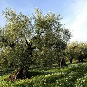 Terreni in mano alla mafia, ettari intestati ai morti: ecco l'agricoltura nera di Sicilia a caccia di aiuti Ue