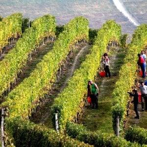 Rinasce il vino di epoca greco-romana, al via la sperimentazione in Sicilia
