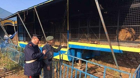 Carini: dopo la fuga della tigre Oscar sequestrati 13 animali al circo