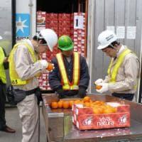Via libera agli agrumi siciliani in Cina, cadono le barriere sanitarie