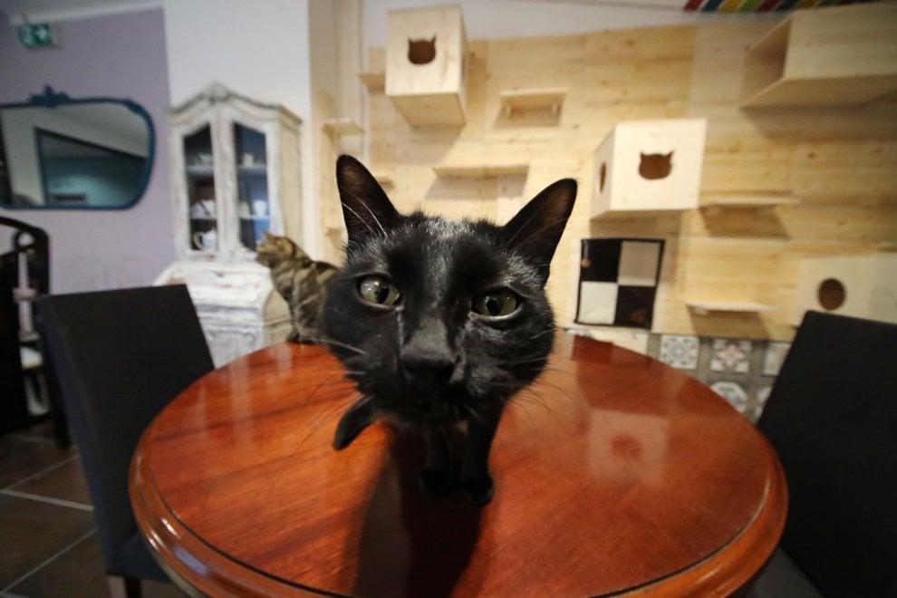 Palermo: i sei gatti che condiscono di fusa la colazione, apre il primo Neko cafè siciliano