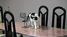 Nasce Nero Miciok il bar dei gatti      foto
