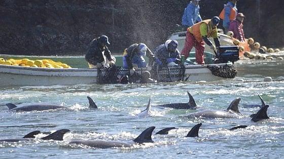 """I pescatori delle Eolie in sciopero contro i delfini: """"O loro o noi"""""""