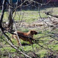 Sciacca: spara ai cani entrati in giardino, gli animalisti insorgono