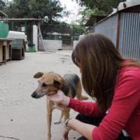 Palermo, vertice sul canile: sospesi i trasferimenti degli animali