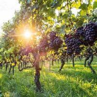 Catania, l'imprenditore vinicolo Gaja scommette sull'Etna