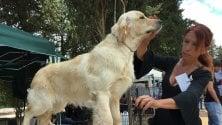 I cani più belli all'Expo di Palermo