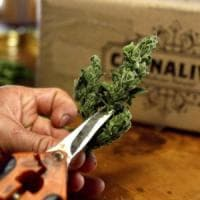 """Palermo: cannabis terapeutica, i farmacisti: """"Prezzo imposto troppo basso, rischio stop..."""